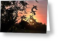Beautiful Park Sunset View Trees Greeting Card