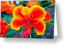 Beautiful Peacock Flower 3 Greeting Card