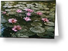 Beautiful Pink Lotus Water Lilies Bloom Greeting Card