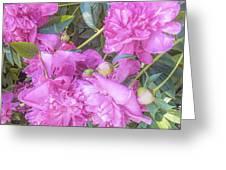 Beautiful Pink Peonies Greeting Card