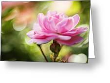 Beautiful Pink Rose Blooming In Garden With Natural Bokeh Greeting Card