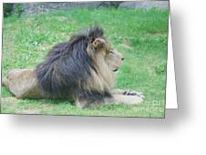 Beautiful Profile Of A Resting Lion In Green Grass Greeting Card