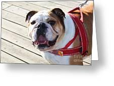 Beautiful Pug. Greeting Card