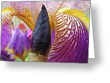 Beautiful Purple Iris Flowwer Floral Art Print Baslee Troutman Greeting Card