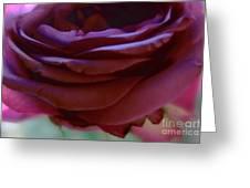 Beautiful Purple Rose Macro 2 Greeting Card