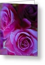 Beautiful Purple Roses 2 Greeting Card