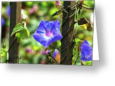 Beautiful Railroad Vine Flower Greeting Card
