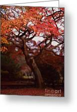 Beautiful Red Japanese Maple Tree In A Garden Greeting Card