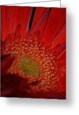 Beautiful Red Greeting Card