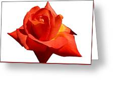 Beautiful Red Rose Photograph Vector Greeting Card