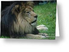 Beautiful Resting Lion In Tall Green Grass Greeting Card