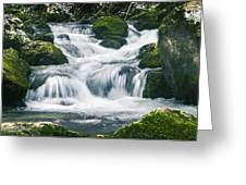 Beautiful River In Forest Greeting Card