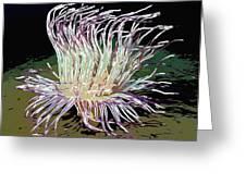 Beautiful Sea Anemone 1 Greeting Card