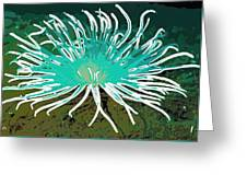 Beautiful Sea Anemone 2 Greeting Card