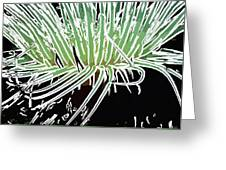 Beautiful Sea Anemone 3 Greeting Card