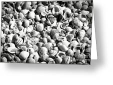 Beautiful Seashells Black And White Greeting Card