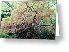 Beautiful Japanese Garden,butchart Gardens,victoria,canada 3. Greeting Card