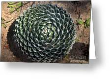 Beautiful Spiked Ball Plant Greeting Card