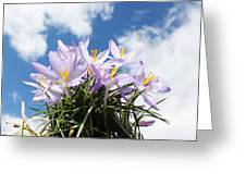 Beautiful Spring Flower Blossom In Sky Background Greeting Card