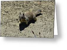 Beautiful Squirrel Standing In A Sandy Area In California Greeting Card