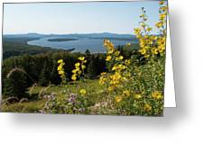 Beautiful Summer Day Greeting Card