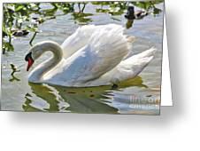 Beautiful Swan Greeting Card