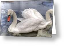 Beautiful Swans Greeting Card