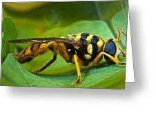Beautiful Syrphid Greeting Card