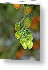 Beautiful Tomatoes Greeting Card