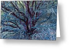 Beautiful Tree Greeting Card