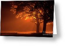 Beautiful Trees At Night With Orange Light Greeting Card