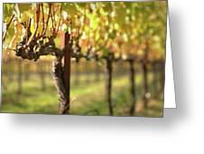 Beautiful Vineyard In Napa Valley Greeting Card