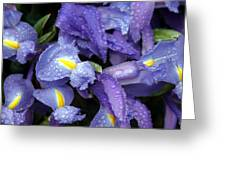 Beautiful Violet Colored Iris Flower With Rain Drops Greeting Card