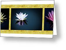 Beautiful Waterlilies Greeting Card