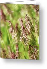 Beautiful Weeds Greeting Card