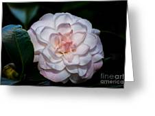 Beautiful White Camellia Greeting Card