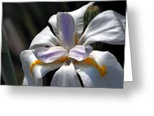Beautiful White Day Lily Greeting Card