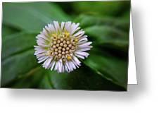Beautiful White Flower Greeting Card