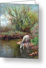 Beautiful White Horse And Enchanting Spring Greeting Card