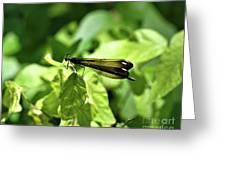 Beautiful Wings Greeting Card