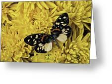 Beautiful Wings On Yellow Mums Greeting Card