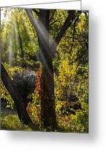 Beautiful Woodlands Greeting Card