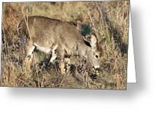 Beautiful Young Deer Greeting Card