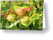 Beautiful Yellow Apple Greeting Card