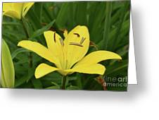 Beautiful Yellow Lily In A Garden During Spring Greeting Card