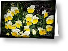 Beautiful Yellow Pansies Greeting Card