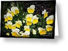 Beautiful Yellow Pansies Greeting Card by Eva Thomas