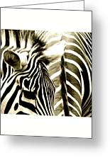 Beautiful Zebras Greeting Card