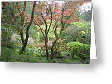 Beauty Among The Trees Greeting Card