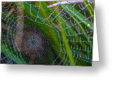 Beauty And Intricacy Greeting Card